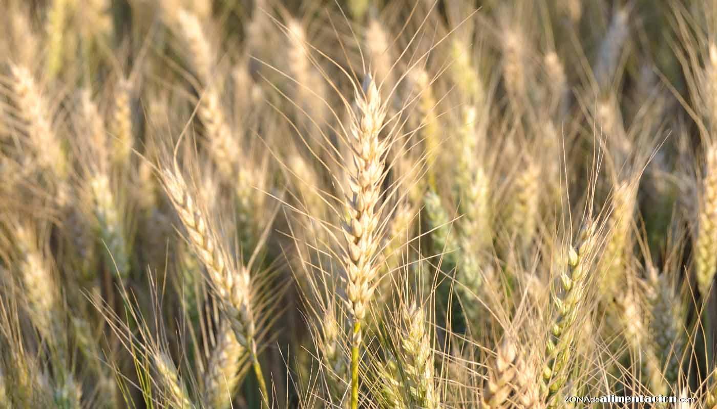 Tipos de trigo y cómo cocinarlo: del grano a la harina
