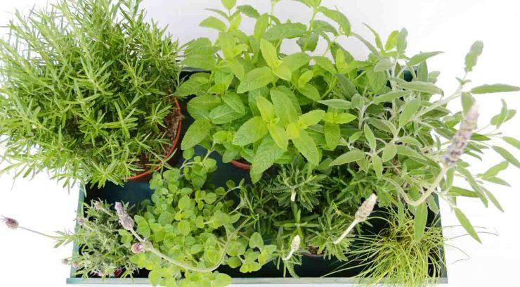 Cómo conservar hierbas aromáticas: trucos y consejos