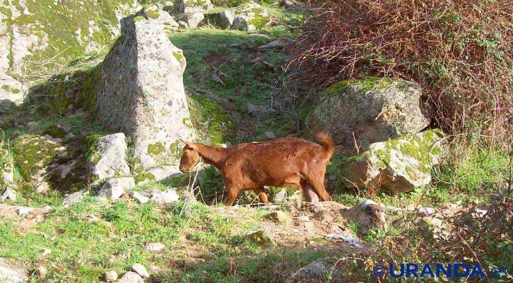La huella ecológica del consumo de carne: el impacto ambiental de la proteína animal - veganismo
