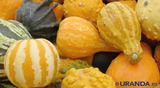 Calabaza: usos culinarios y variedades de calabaza