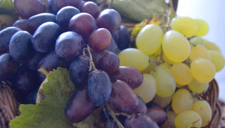 DOP Valencia: uvas, tipos de vinos, marco geográfico y bodegas - vinos de España