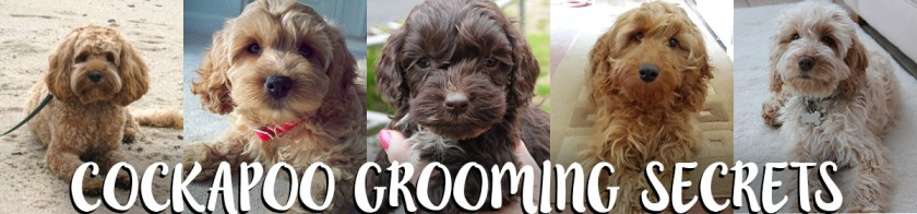 cockapoo-grooming-website-header
