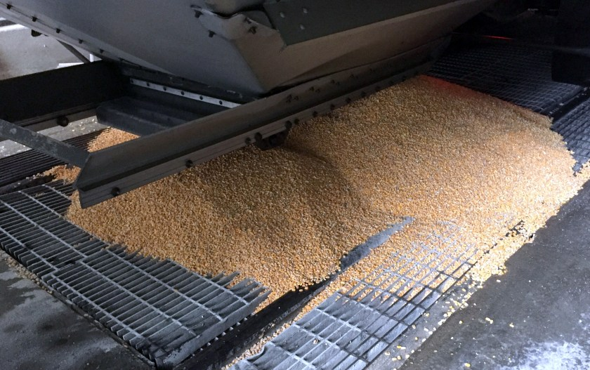 Corn arriving at Buffalo Trace