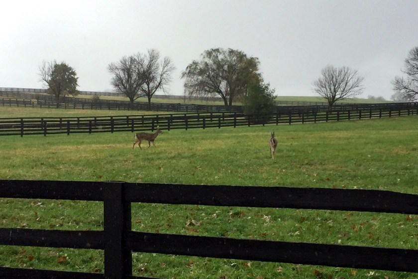 Kentucky Horse Fields near Woodford Reserve.