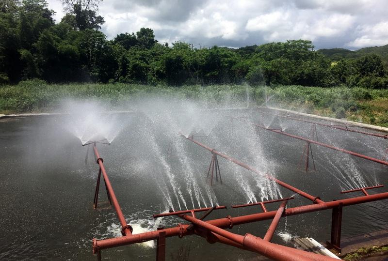Spray pond for cooling, Long Pond, Jamaica. Photo credit: Maison Ferrand