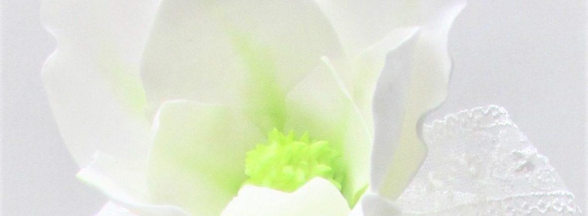 White Sugar Magnolia by Cocoa & Whey Cakes in Winchester, Hampshire
