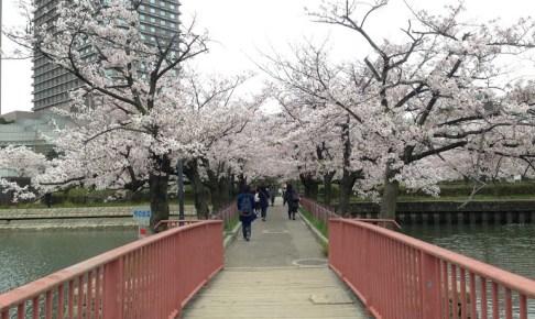 Osaka_sakura_Japan2