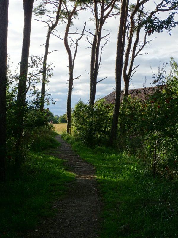 Der Weg durch den Wald