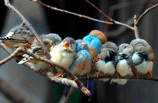 skaisti putni