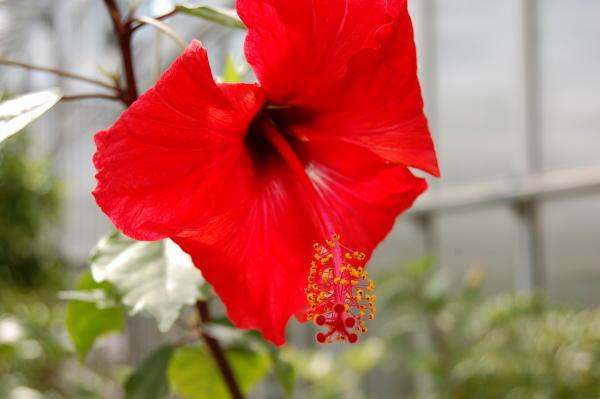 tallinas-botaniskais-darzs