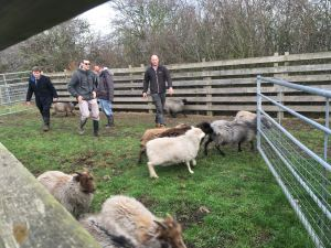 Shepherding day at Lauriston Farm, 21st November '17