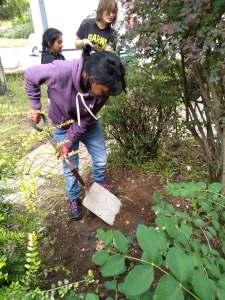 Personal progress 3, Thursday 13th June, gardening at Milestone