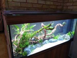 Tuesday 14th January 2020, Sports Adventure 3- Fish tank installation day!!!
