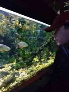 Wednesday 29th January 2020, Employability and Sensory Craft – Clacton Pier Aquarium and Arcade