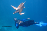 Elegant Margot – HK20 - Swimming with Coco Palm Dhuni Kolhu Snorkeling Guide KD