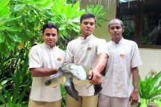 Associates of Coco Palm Dhuni Kolhu with a rescued Olive Ridley Sea Turtle