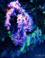 Soft corals at reef overhangs at Maavaru Kandu