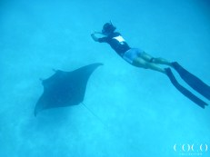 The marine biologists gliding along the graceful Manta Rays