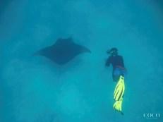 Jesse swimming with Manta Ray M2457 Veronika