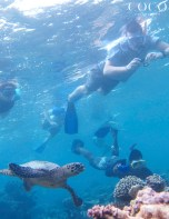 Guests of Coco Palm Dhuni Kolhu swimming with HK632 EMILIA