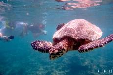 Snorkeling with Birgit Elizabeth