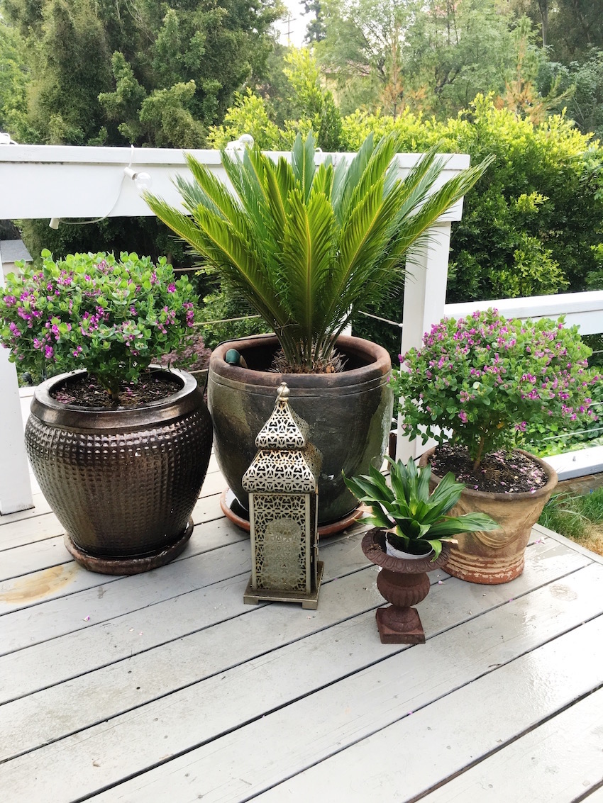 Hollywood Hills Garden Potted Plants