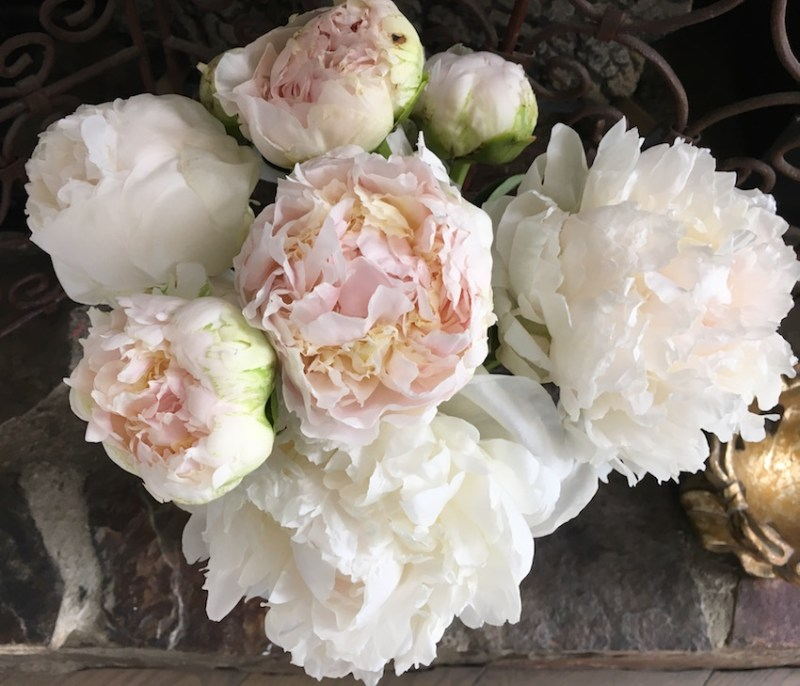 White + Light Pink Peonies
