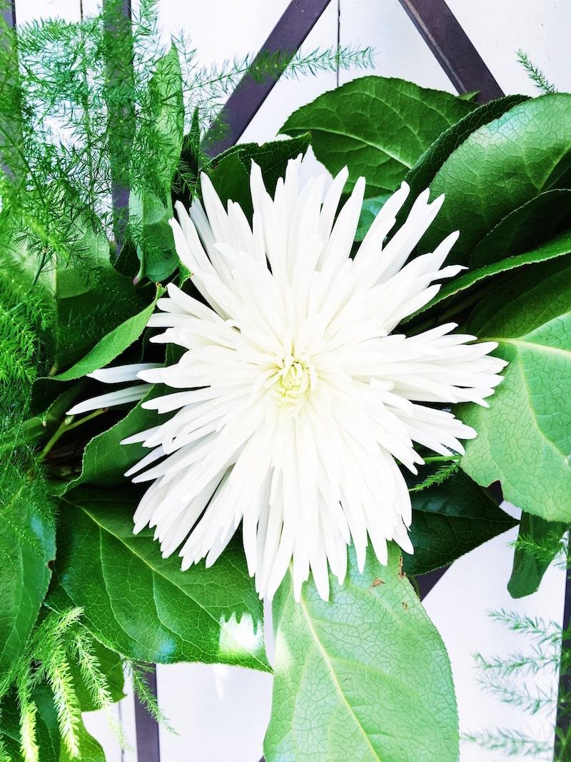 outdoor wine bar white spider mum flower