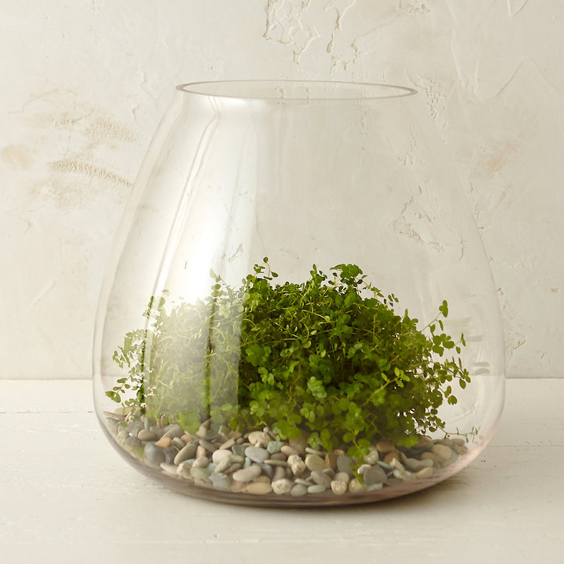 terrarium boho bathroom terrain anthropologie