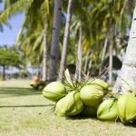 椰子在沙灘上馬來西亞-2048x2560