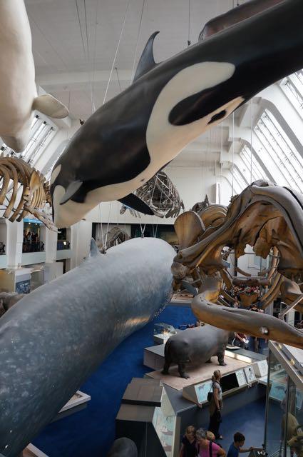 The Natural History Museum, London, UK. Photo: Eeva Routio.
