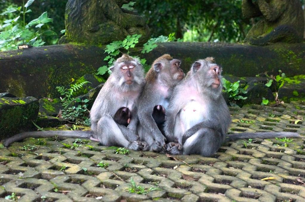 Monkey Forest Ubud Bali, Indonesia. Photo: Eeva Routio.