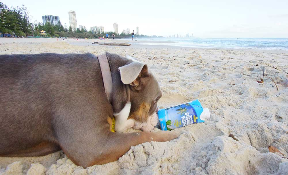 coconut water for dogs