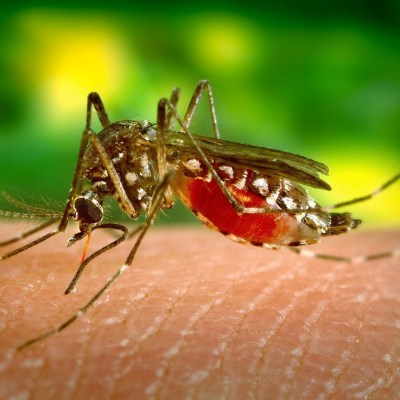Little biters: most insect repellents don't work