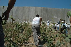 330px-Palestinian_children_and_Israeli_wall