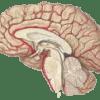 脳の性能を引き出すビタミンB群を知って幸せ+