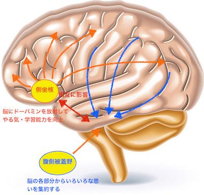 笑いと脳の関係
