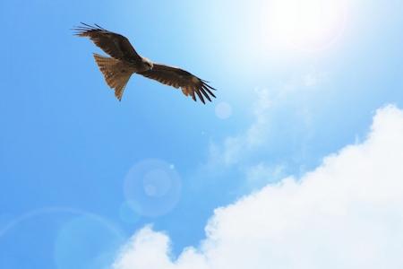 獲物を探す鷹のメンタル