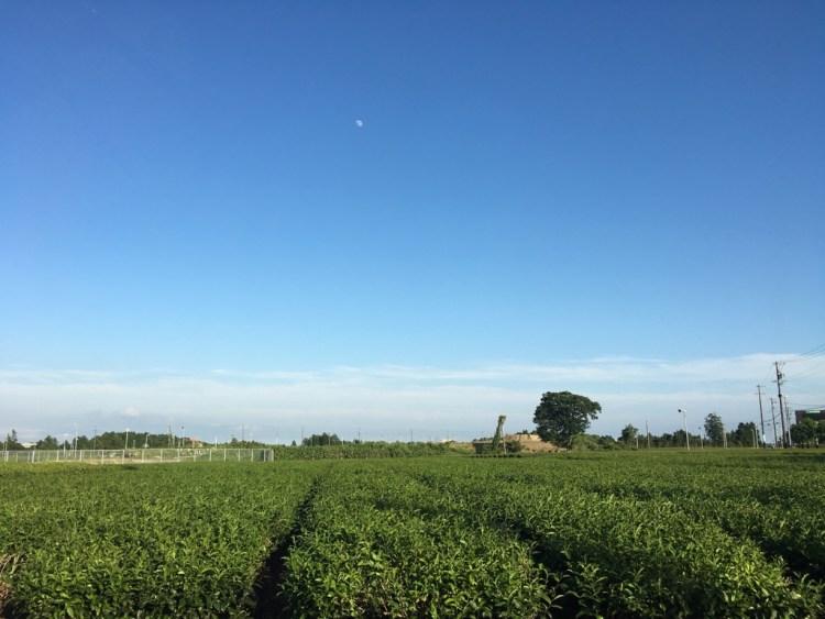 牧之原台地の茶畑