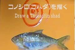 コノシロ(コハダ)
