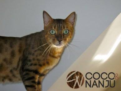 Katzenblog_Nanju_auf_Treppe