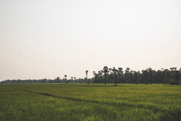 Fields on the road between Eatern Mebon and Pre Rup