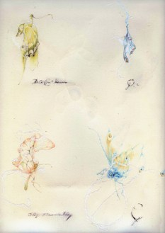 Papillons Fantômes page 3
