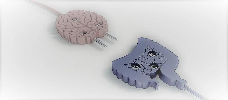 """El segundo cerebro que no es exactamente""""nuestro"""""""