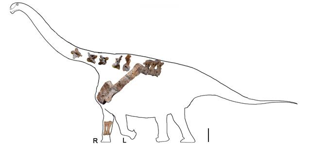 Titanosaurio-03