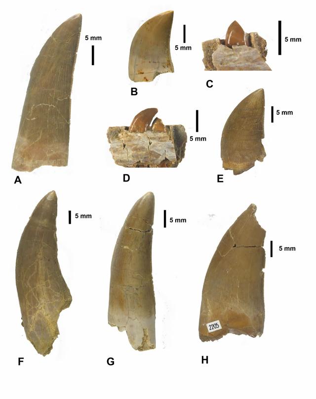 Algunos de los dientes encontrados