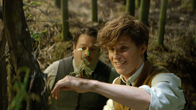 fantastic-beasts-and-where-to-find-them-15