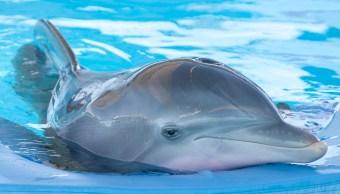 Por fin prohíben espectáculos y terapias con delfines en la CDMX