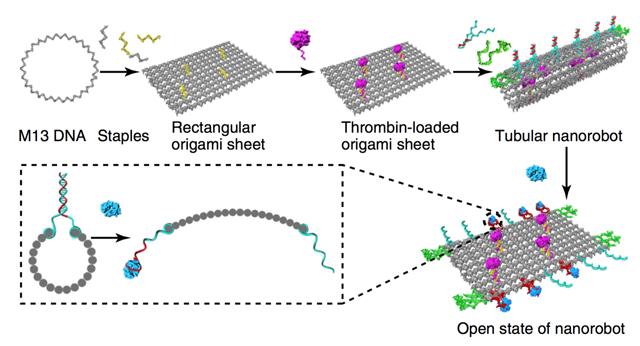 Nanorobots de ADN