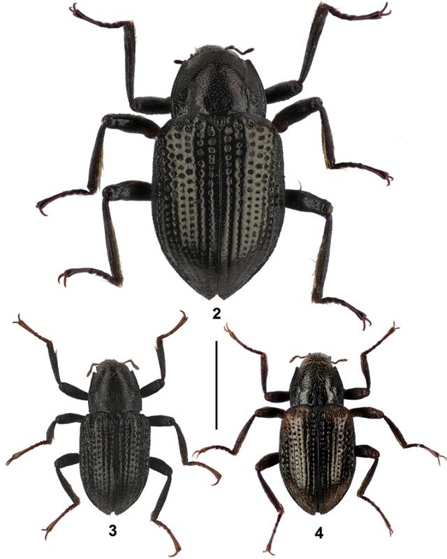 Nombran a escarabajo como Leo DiCaprio